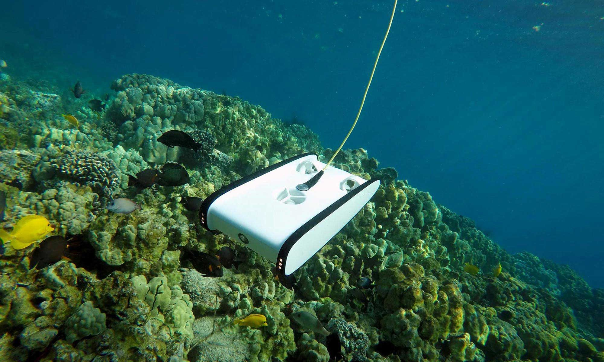 OpenROV Trident exploring coral.